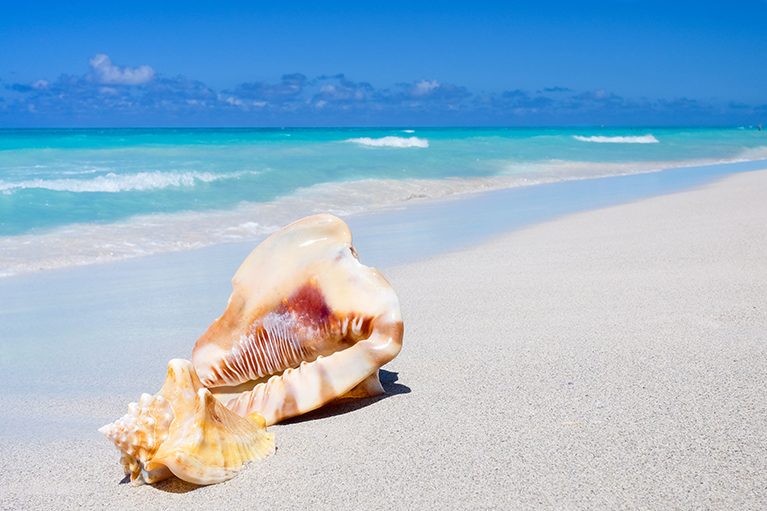 Conch Stock photo 2 Resize