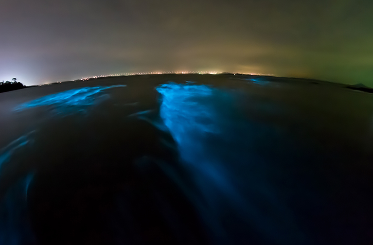 Bioluminescent worm stock photo resize