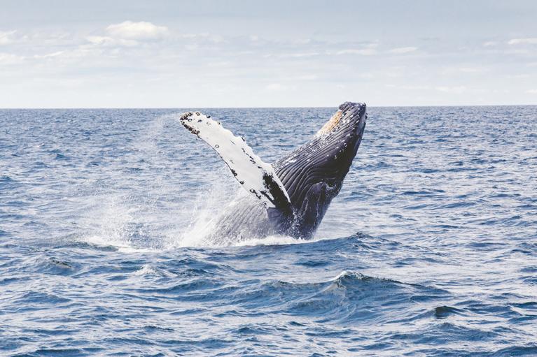 Whale - Triton Luxury Villa (Turks and Caicos)