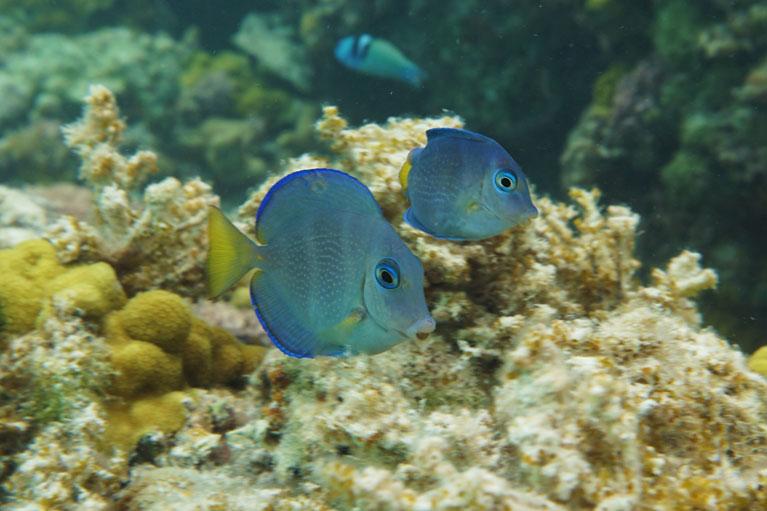 Snorkeling - Triton Luxury Villa (Turks and Caicos)